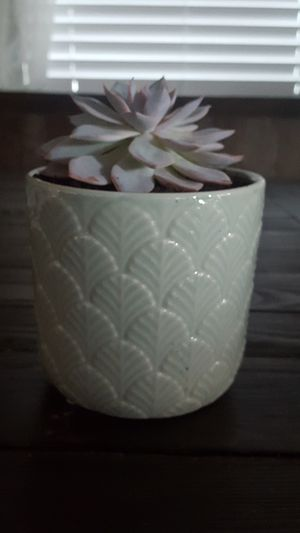 Succulant for Sale in Fontana, CA