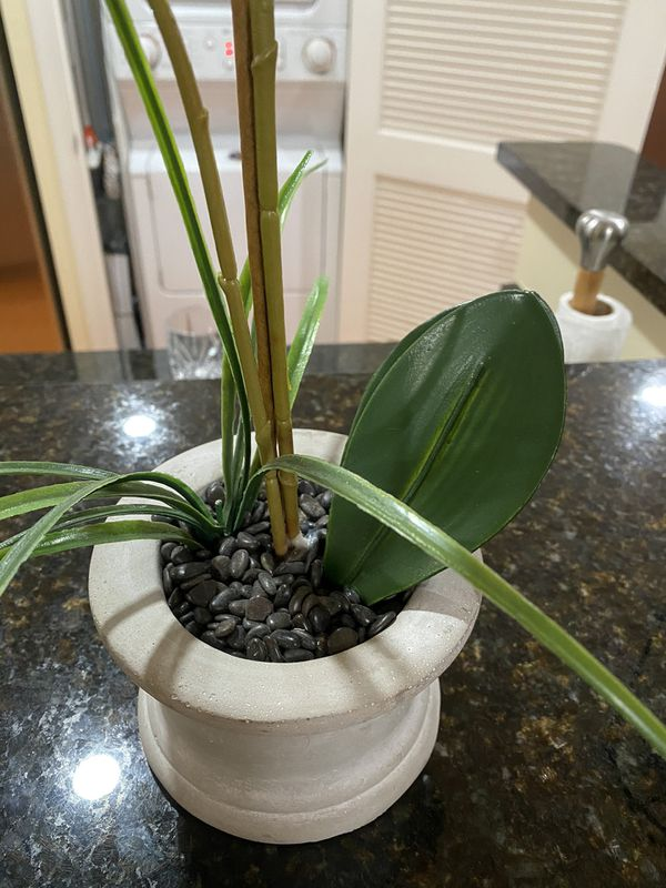Beautiful & New Orchid Plant - Fake/Faux/Artificial - Phalaenopsis