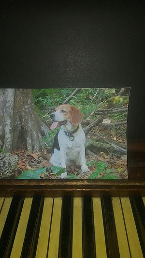 A photo of my dog for Sale in Miami, FL