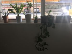 House plants and pots for Sale in Denver, CO