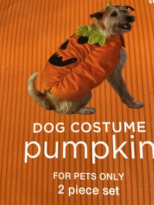 Dog Halloween costume xtra small for Sale in Lakewood, CO