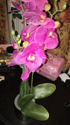 Fake orchid plant for Sale in Fonda, NY