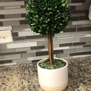 Topiary for Sale in Houston, TX