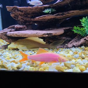 Fish Tank for Sale in Woodbridge, VA