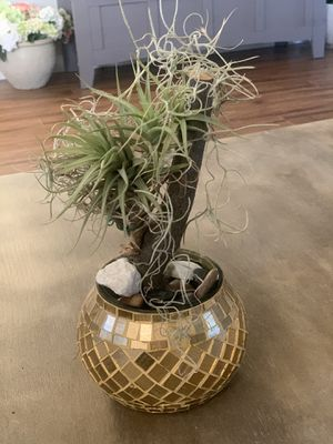 Air plant including glass mosaic gold pot for Sale in Corona, CA