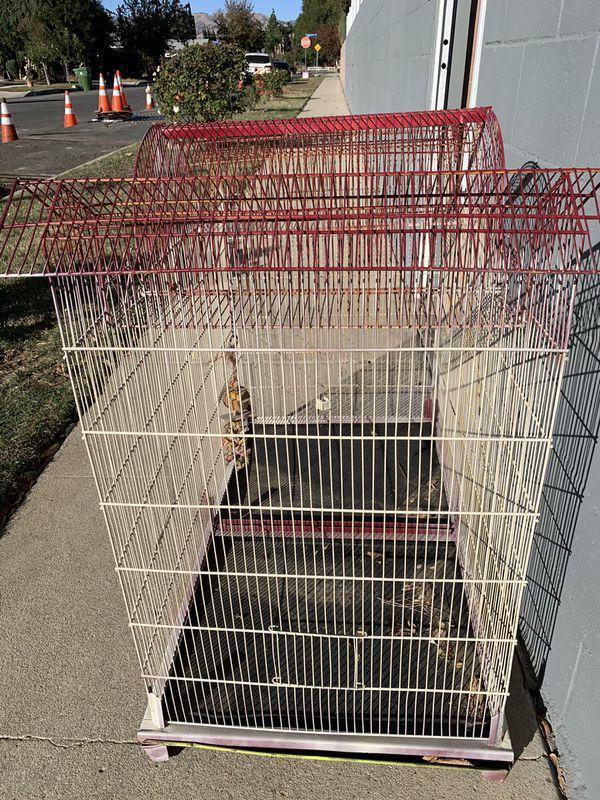 Big Bird Cage-San Fernando Valley's -northridge