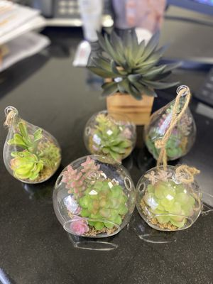 $3 each faux succulents for Sale in Plano, TX