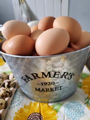 Fresh chicken eggs for Sale in Stockton, CA
