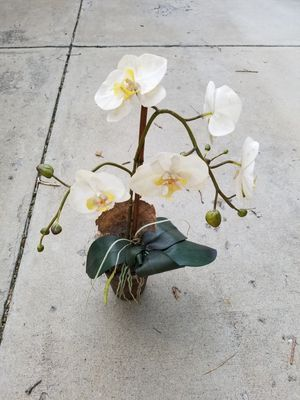 Faux/Fake Orchid. Silk Flower. Plant for Sale in Colorado Springs, CO