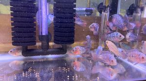 Great FISH tank For sale for Sale in Artesia, CA