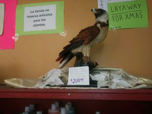 Yang Lin Collection resin eagle / eagle statue for Sale in Fort Worth, TX