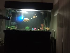 Fish tank for Sale in Bellflower, CA