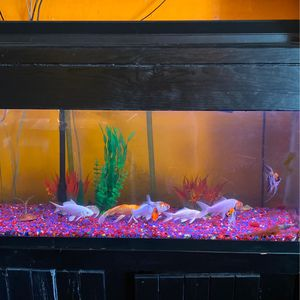 Fish Tank for Sale in Compton, CA