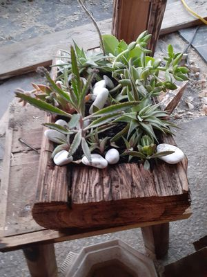 House hand made succulent in wood for Sale in Pembroke Pines, FL