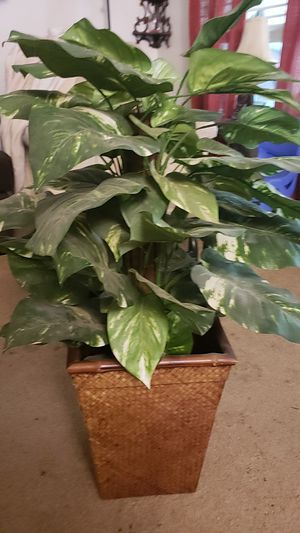 Fake plant for Sale in Beverly, MA