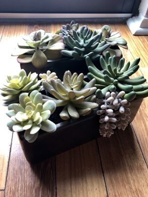 Fake Plants - Potted Succulents (set of 2) for Sale in Austin, TX