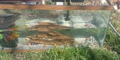 55 Gallon Fish Tank And Accessories for Sale in Fort Worth,  TX