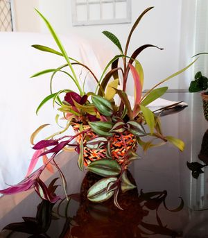Beautiful live 4 plants in one 4 inch decorative pot for Sale in Bellerose, NY