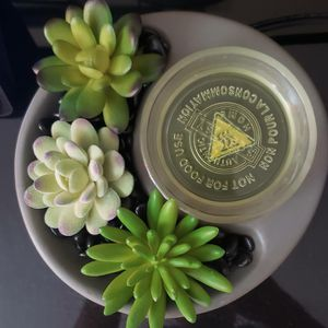 Zen garden scentsy warmer for Sale in New York, NY