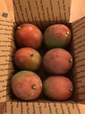 MANGOS !! MANGOES 😋 for Sale in Miami Springs, FL