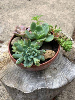 Unique, handmade, terra-cotta, glazed whole planter for Sale in Vancouver, WA