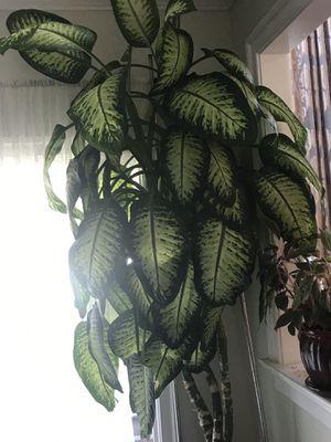 Plant for Sale in FSTRVL TRVOSE, PA