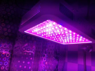 【2 lights】2000W LED Grow Light / Boost up growing plants speed! for Sale in Torrance,  CA