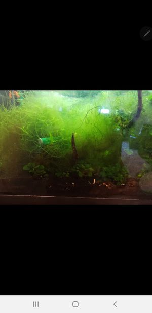Aquarium with live plants nd fish with eheim 2214 filter for Sale in Schaumburg, IL