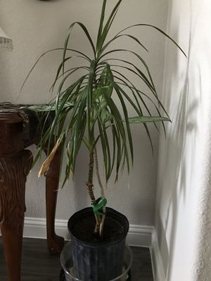 LIVE PLANTS for Sale in Houston, TX