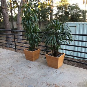 plants , palm , indoor plants , house plant for Sale in Seal Beach, CA