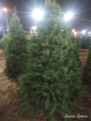 Xmas tree 6'7 ft for Sale in Fresno, CA
