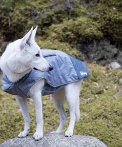 Brand New!!! Outward Hound Silverton Weatherproof Thinsulate Warm Coat for Dogs for Sale in Charlotte,  NC