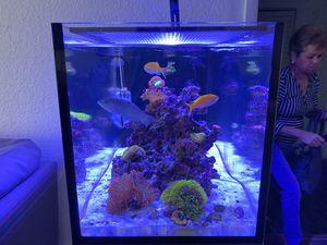 Nuvo Fusion peninsula 20 for Sale in Miami, FL