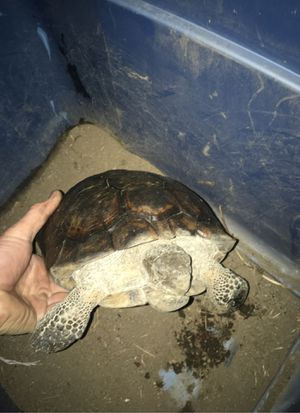 MyPet Tortoise transport container for Sale in Garden Grove, CA