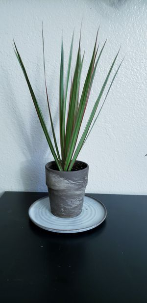Live plant in terracotta pot with plate for Sale in Chandler, AZ