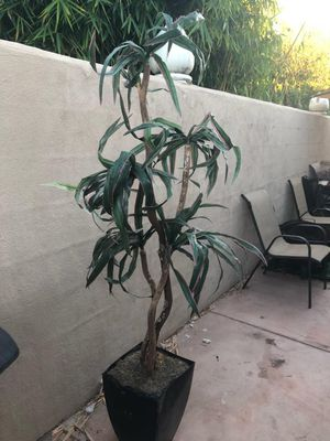Plant for Sale in San Diego, CA