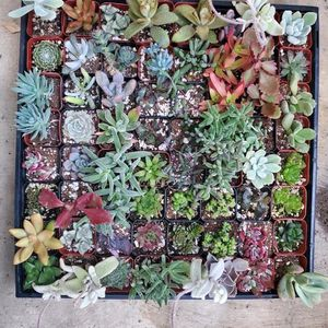 Plants for Sale in Compton, CA