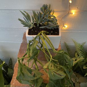 Monstera Plant In A Hanging Porcelain Pot for Sale in Newport Beach, CA