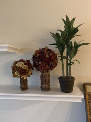 Various Flowers and plants for Sale in Coconut Creek, FL