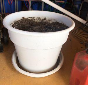 Flower plant Pot for Sale in Pflugerville, TX