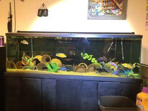 Aquarium Fish Tank Tanks Filters Heaters for Sale in Porter, TX