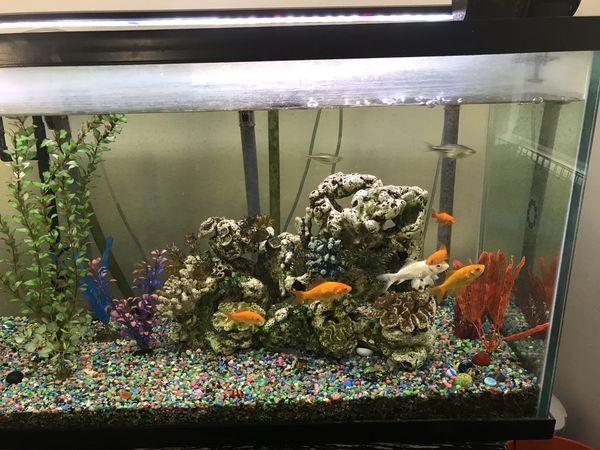 75 gallon custom fish tank thick glass