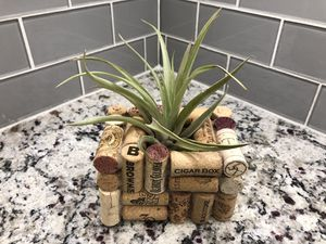 Air Plant in Wine Cork Planter for Sale in Long Beach, CA