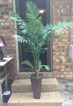 House Plant for Sale in Nashville, TN