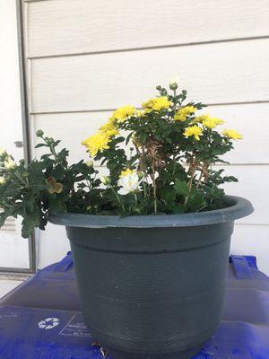 Plant hablo español for Sale in Rancho Cucamonga, CA