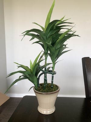 Faux Bamboo Plant for Sale in Lake Stevens, WA