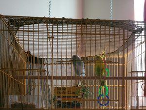 Bird cage for Sale in Zephyrhills, FL