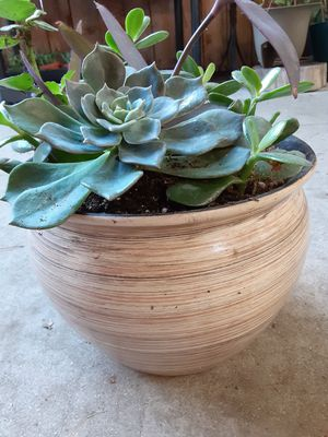"Succulent plant is a Beatiful pot, measurement 9""X7"" , $22 for Sale in Anaheim, CA"