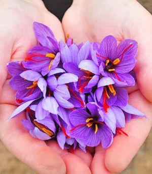 1 kg Afghan Saffron for Sale in Falls Church, VA