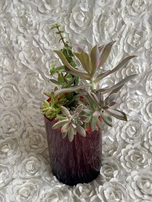 Beautiful succulent arrangements in red vase ❤️ for Sale in Riverview, FL